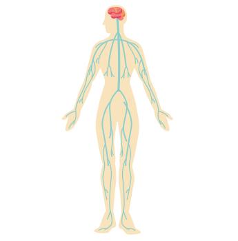 神経や血管の通り道
